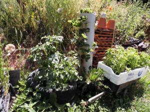 Kartoffelturm, Erdbeerbaum und Chilikiste